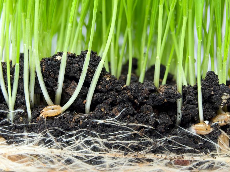 Ein ansteigender Na  Gehalt im Spross könnte ein Indikator für die Salztoleranz  einer Pflanzen sein (© Sinisa Botas / Fotolia.com)
