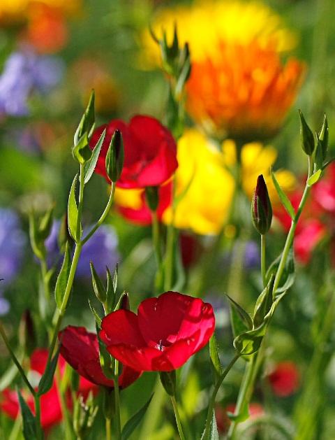 Biologische Vielfalt (Quelle: © Angelika Wolter / PIXELIO www.pixelio.de)