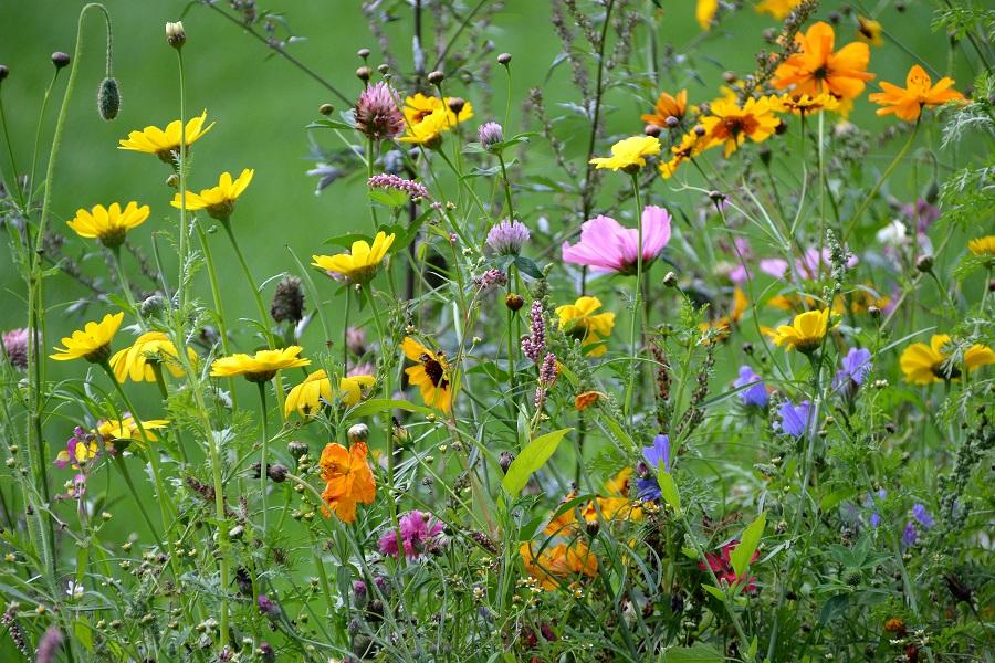 Artenreichtum ist Ausdruck und Voraussetzung zugleich für die Stabilität und das Funktionieren eines Ökosystems - und darüber hinaus.
