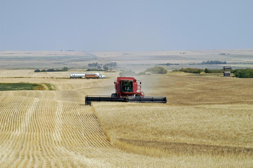 Auch das ist Kanada. Auf seinen Prärien östlich der Rocky Mountains wird großflächig Getreide angebaut.