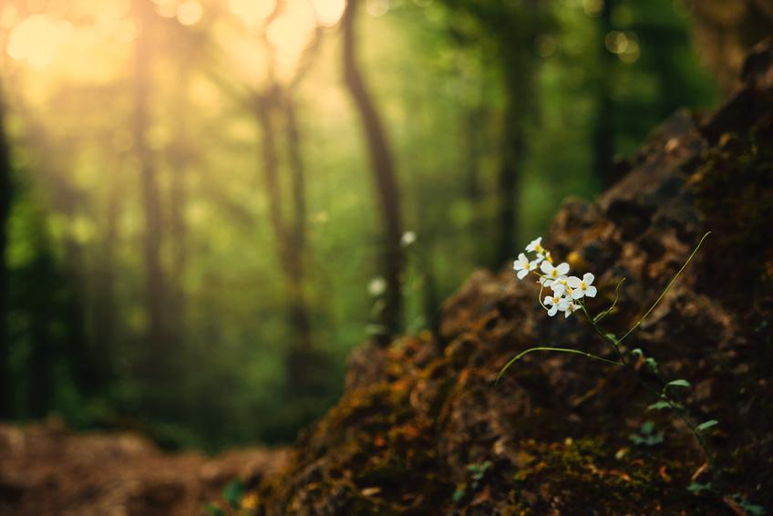 Egal wo eine Pflanze wächst, sie ist immer in engem Kontakt mit Mikroorganismen. (Bildquelle: © Tamas Zsebok / Fotolia.com)