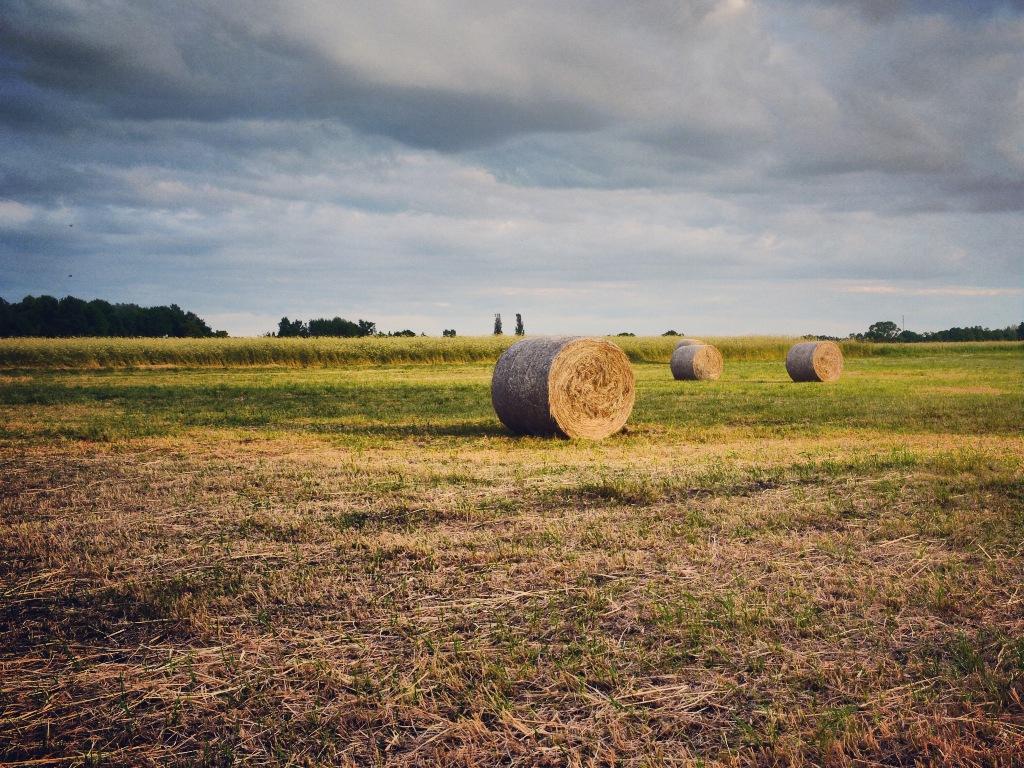 Derzeit werden fast drei Viertel des Landes in Großbritannien für landwirtschaftliche Zwecke genutzt. (Quelle: © Gordon Gross  / pixelio.de)