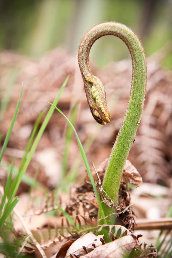 Dank Auxin bleiben Pflanzen beweglich.