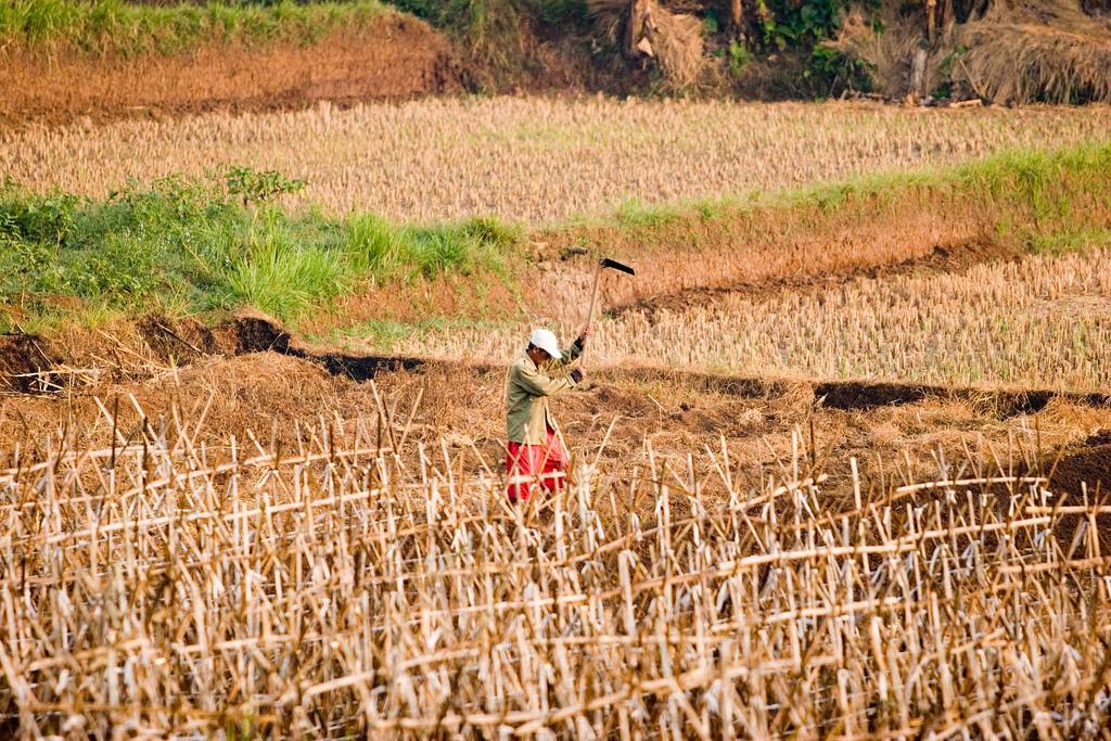 Die Verbesserung der Ernährungssituation von Subsistenzlandwirten ist ein Thema, mit dem sich Matin Qaim befasst. (Bildquelle: © Danumurthi Mahendra/Flickr/CC BY 2.0)