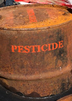 Beim Sojabohnenanbau erhöhte sich der Herbizideinsatz aufgrund von resistenten Beikräutern bereits nach einigen Jahren wieder. (Quelle: © iStockphoto.com/ zoran simin)