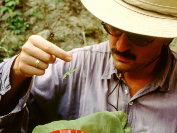 Josef Settele beim Inspizieren einer Heuschrecke (1997). Nur wenige Biologen verfügen heute noch über umfassenden Artenkenntnisse. (Quelle: © J. Settele/UFZ)