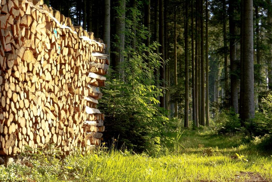 Wie kann der Wald nachhaltig in den Klimaschutz eingebunden werden? (Bildquelle:© Rainer Sturm / pixelio.de)