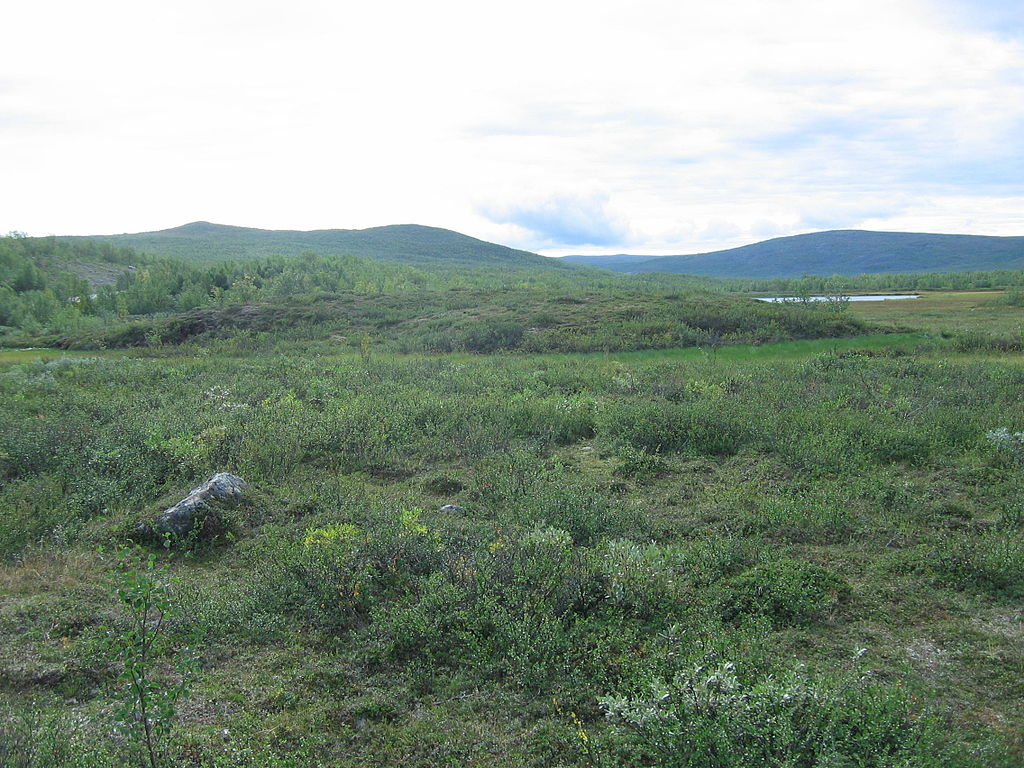 Als Palsa werden niedrige ovale Bodenerhebungen in Permafrostgebieten bezeichnet. Da für die Bildung seines Kerns aus gefrorenem Torf und Eislinsen Wasser nötig ist, ist seine Entstehung an Moorböden gebunden.