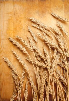 Getreide mit großer Bedeutung: Weizen stellt die Haupt-Protein- und Kohlenhydratquelle für die Weltbevölkerung dar. (Quelle: © iStockphoto.com/ Anelina)