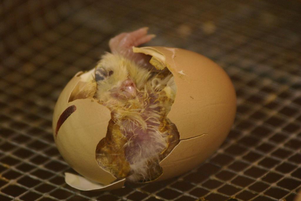 Ein Henne-Ei-Problem für Naturwissenschaftler: Wie ist Leben entstanden? Die RNA-Welt-Hypthese liefert eine plausible Erklärung.