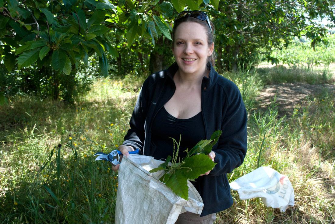 Die Ethnobotanikerin und Leiterin der Studie Cassandra Quave sammelt auf einem Feld in Süditalien Kastanienblätter.