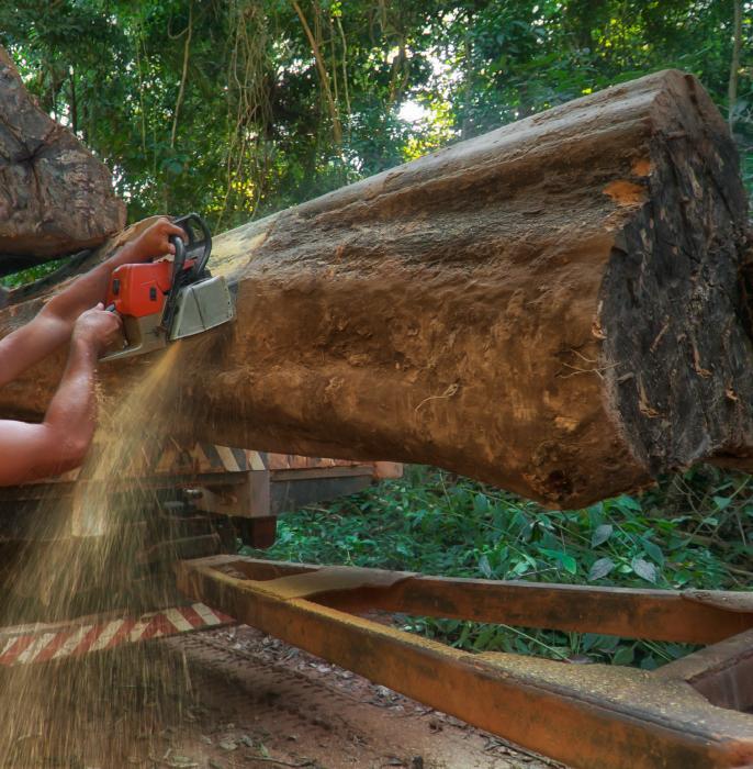 Durch Abholzung greifen wir massiv in das Ökosystem Wald ein.