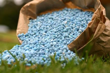 Auf gedüngten Feldern produzieren Bodenbakterien besonders viel Lachgas. (Quelle: © iStockphoto.com/ Kym McLeod)