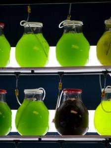 Algen werden im Labor in Bioreaktoren kultiviert. (Quelle: © iStockphoto.com/Rob Broek)
