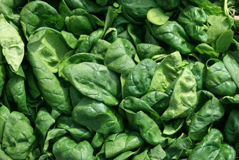Spinat ist reich an Chlorophyllen und Carotinoiden. Im Sinne der gesundheitsfördernden Eigenschaften gilt es, diese im Zuge der Lebensmittelkonservierung zu erhalten. (Bildqulle: © w.r. wagner/ pixelio.de)