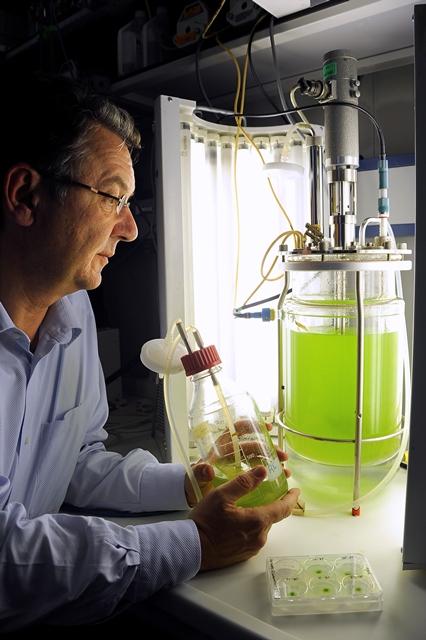 Forschen für die Gesundheit mit Pflanzen, die Arzneimittel produzieren. Im Bild Prof. Dr. Ralf Reski (Quelle: © Thomas Kunz)