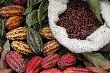 Kakao (Theobroma cacao) und Baumwolle entwickelten sich aus einem gemeinsamen Vorfahren.