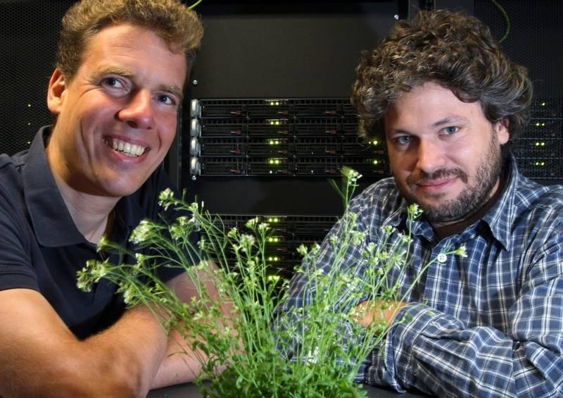 Prof. Dr. Ivo Große (Universität Halle-Wittenberg, links) und Dr. Marcel Quint (Leibniz-Institut für Pflanzenbiochemie) mit einem Exemplar der Ackerschmalwand im Rechenzentrum der Uni Halle. (Foto: © Uni Halle, Maike Glöckner)