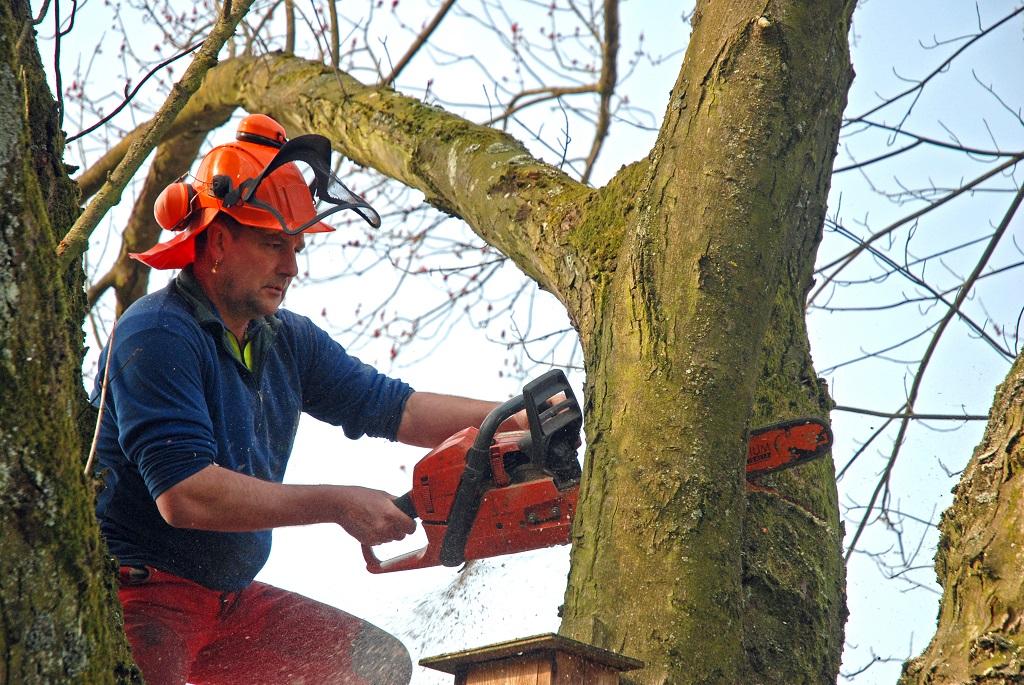 Bäume für Brennholz zu fällen, könnte in ferner Zukunft überflüssig sein, wenn es dem Menschen gelingt, Energie von lebenden Pflanzen abzuzapfen.