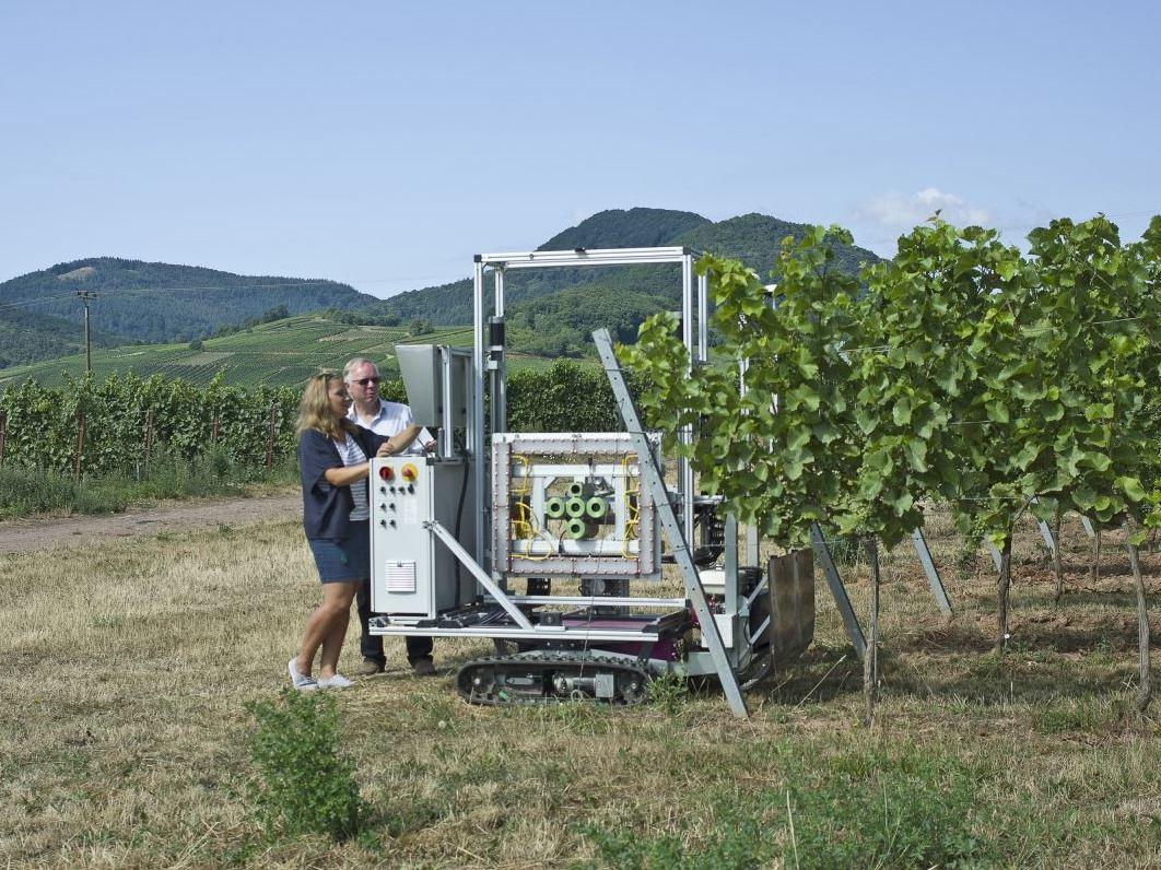 """Der """"PHENObot"""" ist ein Phänotypisierungsroboter. Unter dem komplizierten Name verbirgt sich ein Freilandroboter, der automatisiert die äußerlichen Merkmale (Phänotyp) von Weinreben direkt an den Rebstöcken im Weinberg erfassen kann."""