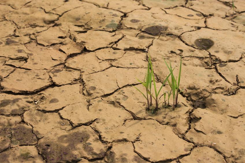Wie wirken sich Umweltveränderungen wie Dürre auf den Stoffwechsel in Pflanzen aus? Die Studie ging dieser Frage nach. (Bildquelle: © el2ror / Fotolia.com)