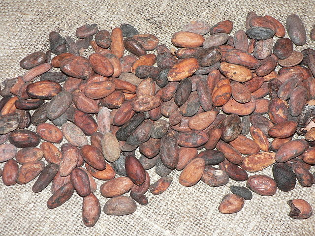 Schokolade wird aus den Samen des Kakaobaums hergestellt. Die Samen werden auch Kakaobohnen genannt und befinden sich im Innern der Früchte.