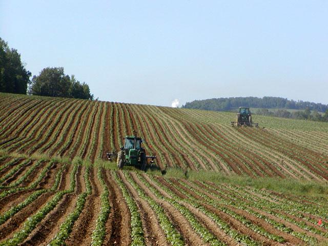 Der Klimawandel wird dazu beitragen, dass sich landwirtschaftlich nutzbare Anbauflächen in Zukunft verschieben werden.