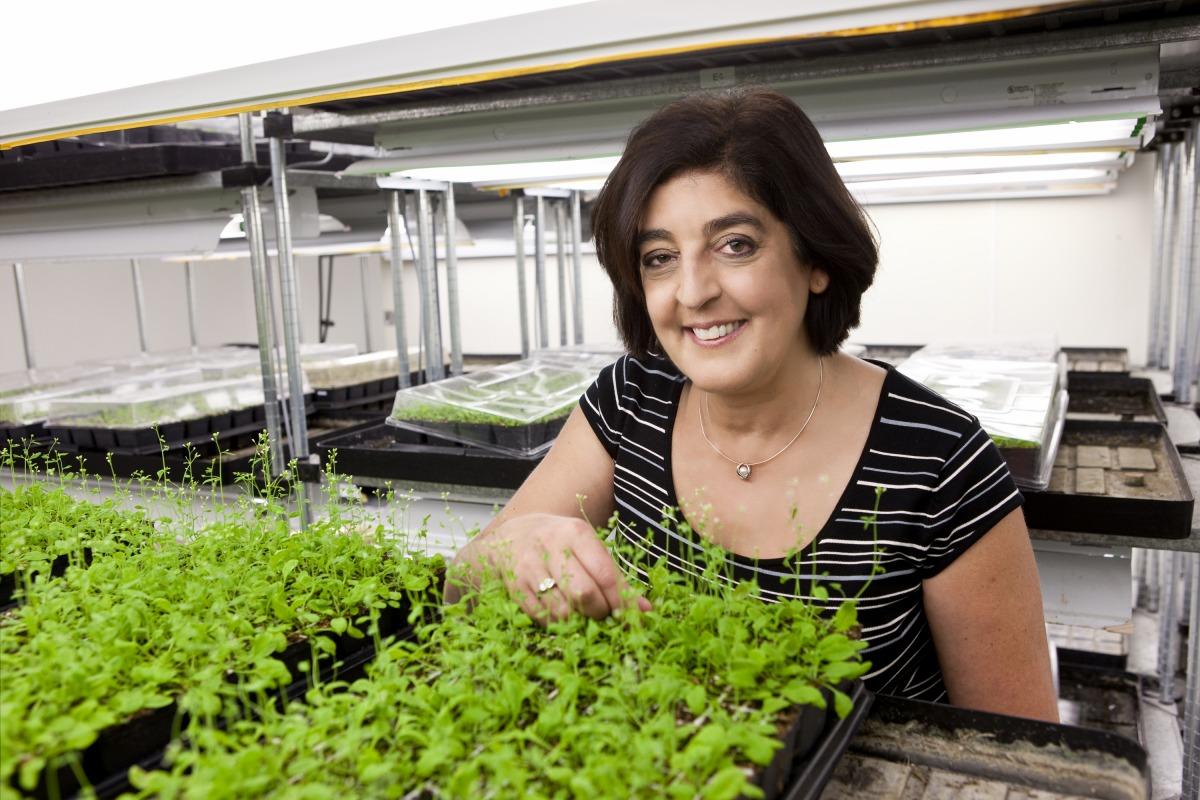 Wissenschaftler untersuchen in lichtliebenden Arabidopsis-Pflanzen, inwiefern Lichtverhältnisse die Architektur von Pflanzen bestimmen.