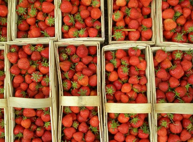 Höhere Bestäubungsraten führen zu höheren Ernteerträgen bei Erdbeeren.