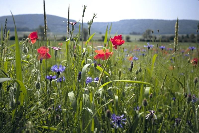 Eine hohe Artenvielfalt ist Kennzeichen und Voraussetzung zugleich für ein intaktes Ökosystem.