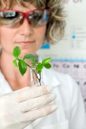 Innovative Verfahren revolutionieren die Züchtungsforschung (Quelle: © iStockphoto.com/ Mara Radeva)