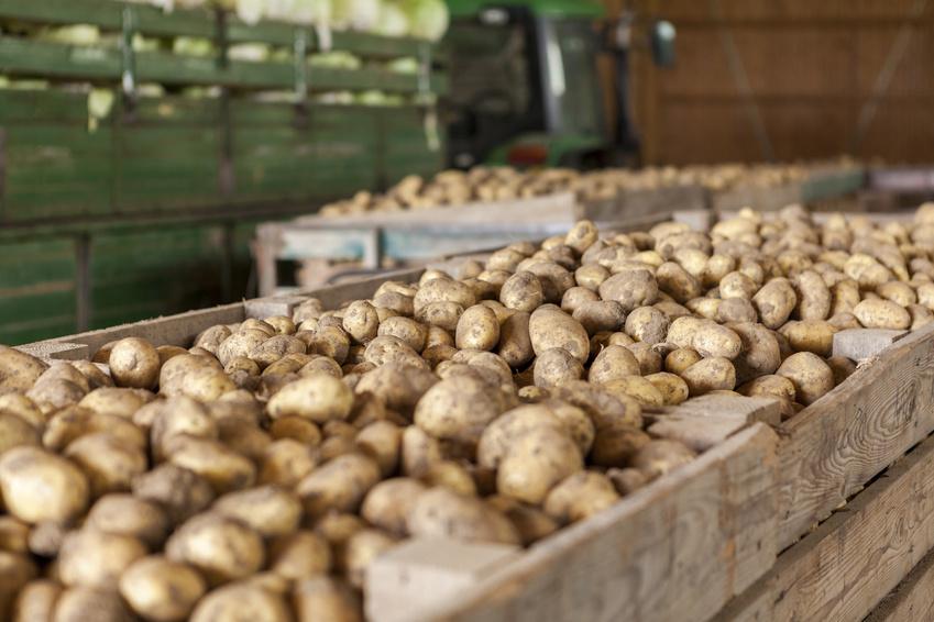 Die Kartoffel stammt ursprünglich aus Südamerika.