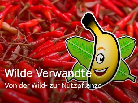 """Passend zum Thema: Unser Plantainment """"Wilde Verwandte"""""""