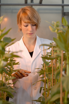 Zinkfingernukleasen sind die Präzisionswerkzeuge der Pflanzenzüchter (Quelle: © iStockphoto.com/Andreas Reh).