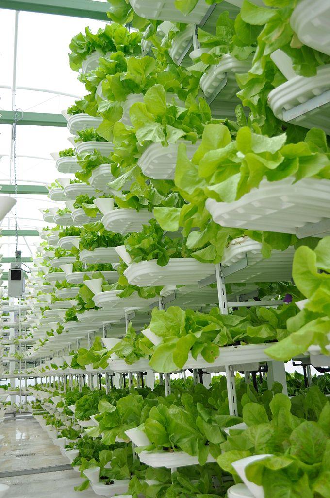Vertikal anpflanzen: Um Ackerfläche zu sparen und Landwirtschaft direkt dort zu betreiben, wo deren Produkte konsumiert werden, in Städten.