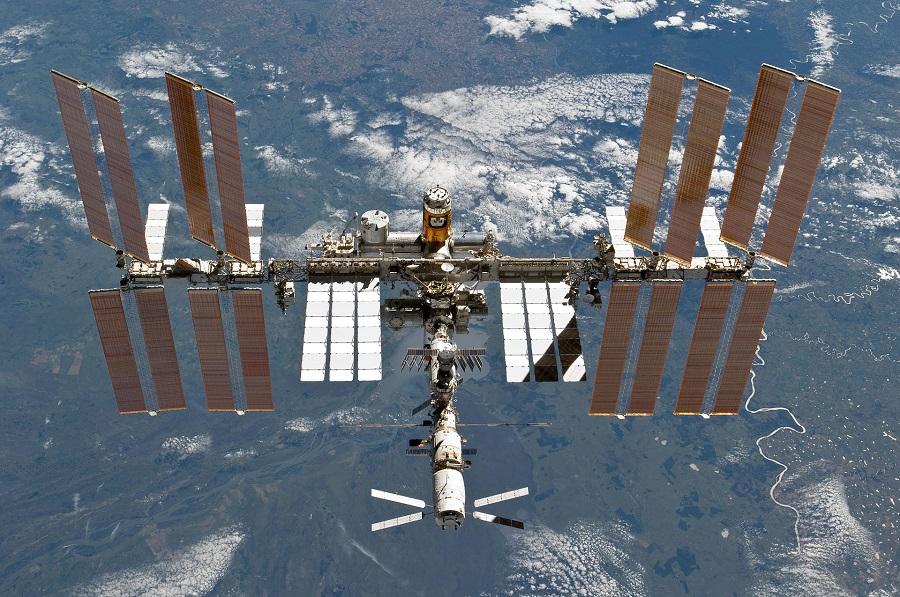 Wenn alles klappt, wird Ficus pumila am Vorabend des Nikolaustages zur ISS aufbrechen.