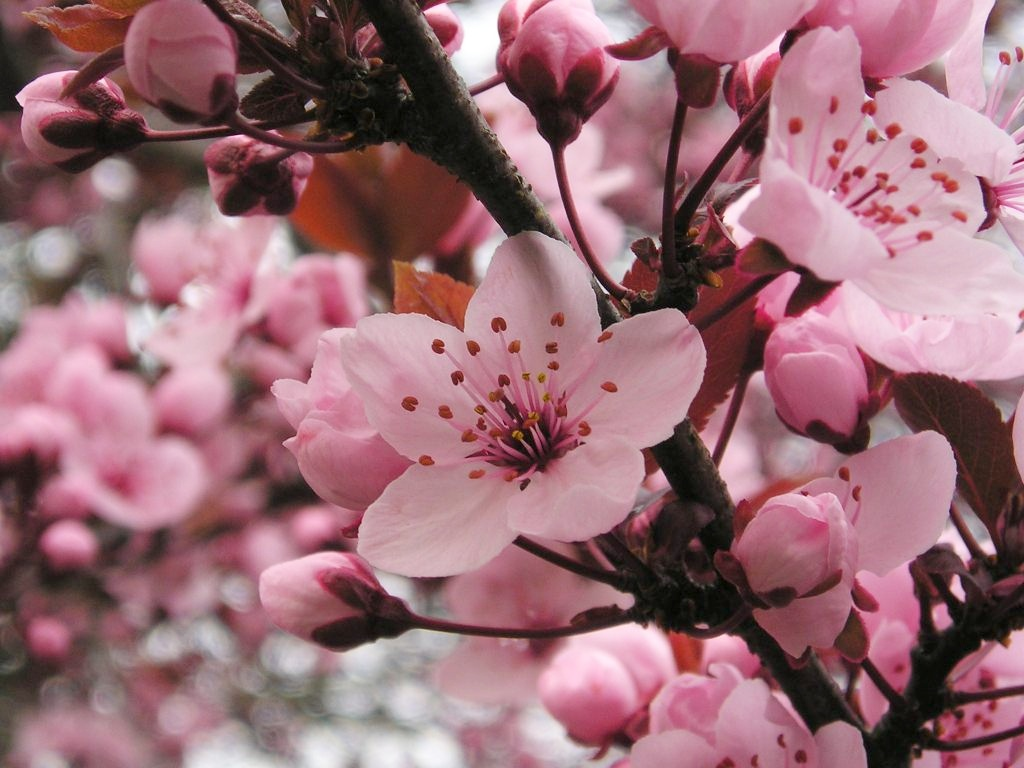 Blüten sind nicht nur schön anzusehen: Sie haben die Funktion, Früchte und Samen zu produzieren. (Bildquelle: © Maja Dumat / pixelio.de)