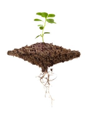In übersäuertem Boden nehmen Pflanzen verstärkt Schwermetalle auf. (Quelle: © iStockphoto.com/ Luis Fernandez)