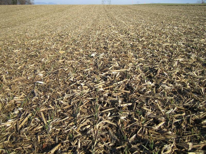 Helle Böden, auf denen die Erntereste im Direktsaatverfahren verbleiben erhitzen die Luft wesentlich weniger, als gepflügte und dunkle Böden. (Bildquelle: Volker Prasuhn/ wikimedia.org/ CC BY-SA 3.0)