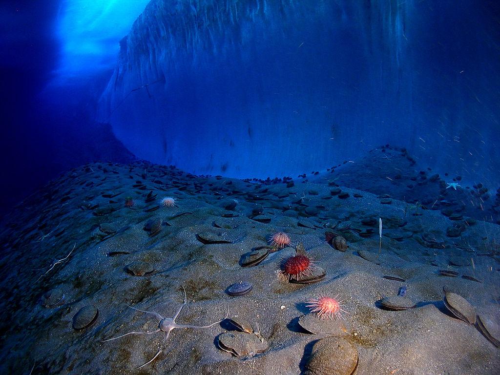 Das Südpolarmeer ist ein bevorzugtes Forschungsgebiet für Wolkenforscher. Unterhalb des Meeresspiegels eingeschlossen.