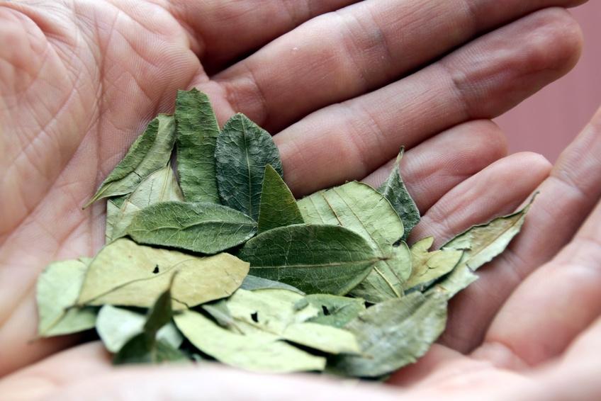 In Kolumbien ist der Anbau von Koka für die Drogenproduktion ein großes Problem, weil er armen Bauern kurzfristig hohe Gewinne verspricht.