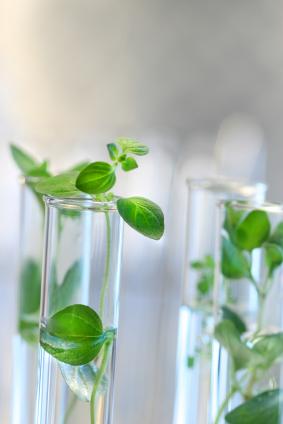 Wachstumshormone werden erforscht. (Quelle: © iStockphoto.com/Sandra Cunningham)