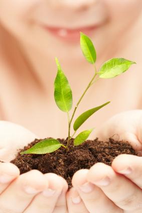 Nahrung und Rohstoff der Zukunft: Pflanzen (Quelle: ©iStockphoto.com/Andrey Armyagov)