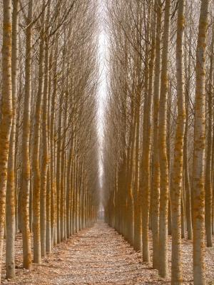 Die Nutzung der Biomasse landwirtschaftlicher Kulturen und auch von Wäldern wird immer öfter kontrovers diskutiert.