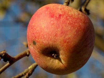 Äpfel sind eine natürliche Pektinquelle.
