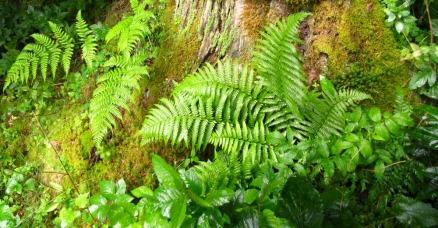 Im devonischen Zeitalter breiteten sich Gefäßpflanzen, z. B. Farne und Moose weiter aus. (Quelle: © Rainer Sturm / Pixelio.de).