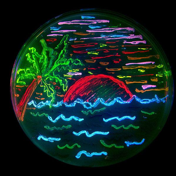 Fluoreszierende Proteine ermöglichen ganz neue Einblicke in die Zellbiologie. Die Illustration zeigt acht verschiedene fluoreszierende Proteine, die hier in Bakterien exprimiert wurden.