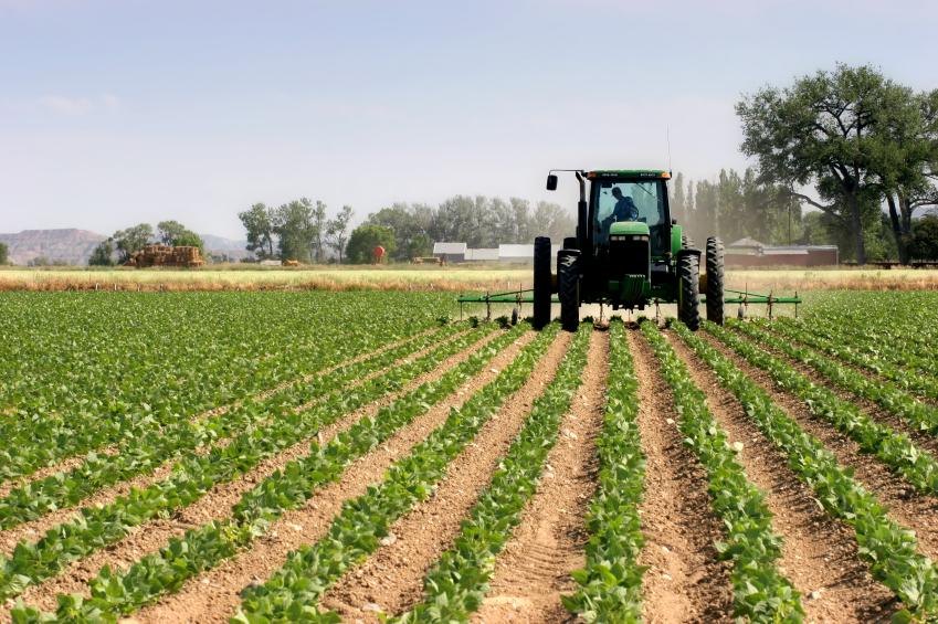 Intensive Landwirtschaft. (Quelle: © iStockphoto.com/ Sascha Burkard )