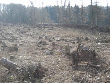 Sturmschäden können katastrophale Folgen haben. Durch Krankheiten vorgeschädigte Bäume sind besonders anfällig für Sturmschäden.