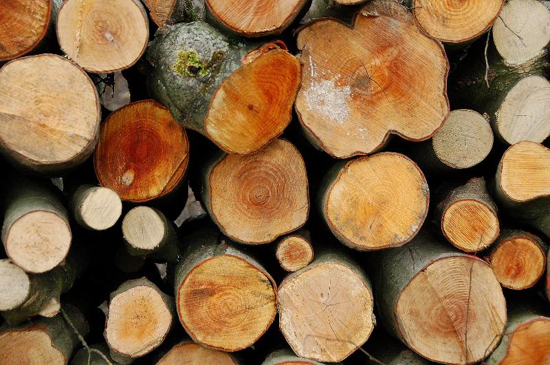 Die Menge des gespeicherten Kohlenstoffdioxids, die der Atmosphäre durch Bäume entzogen wird, ergibt sich durch die Multiplikation des gespeicherten Kohlenstoffs mit dem Faktor 3,67. Die Menge ist unter anderem von Baumart, Baumhöhe und -durchmesser abhängig und unterscheidet sich von Baum zu Baum.